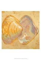 Shoreline Shells II Fine Art Print