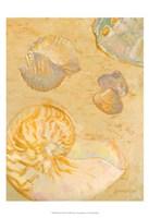 Shoreline Shells VI Fine Art Print