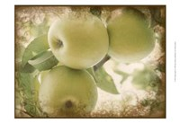 Vintage Apples II Fine Art Print