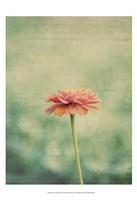 Flower Portrait III Fine Art Print