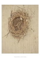 Nesting I Fine Art Print