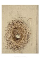 Nesting III Fine Art Print