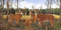 Grazing Deer Fine Art Print