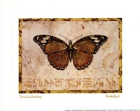 Butterfly V Framed Print