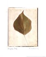 Single Leaf Fine Art Print