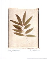 Bay Leaves Fine Art Print