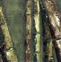 Bamboo Columbia I Framed Print