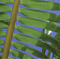 Palm Collection I Fine Art Print