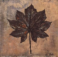 Maple III Fine Art Print