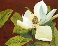 Magnolia II Fine Art Print