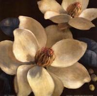 Blooming Magnolias I Fine Art Print