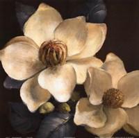 Blooming Magnolias II Fine Art Print