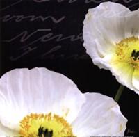 Poppies Over Black I Framed Print