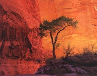 Lone Pine Fine Art Print