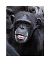 Funny face monkey Fine Art Print