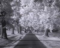 Kentucky Horse Park Lane Framed Print