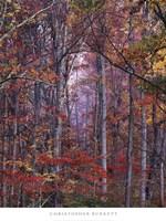 Glowing Autumn Forest, Virginia Fine Art Print