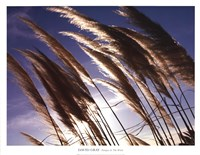 Pampas In The Wind Fine Art Print