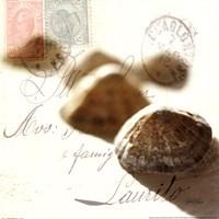 Postal Shells IV Fine Art Print