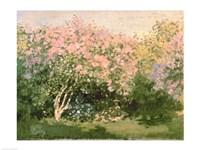 Lilac in the Sun, 1873 Fine Art Print