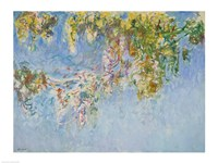 Wisteria - blue Fine Art Print