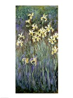 The Yellow Irises Framed Print