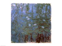 Blue Nympheas Fine Art Print
