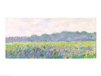 Field of Yellow Irises at Giverny, 1887 Fine Art Print