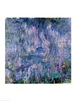 Waterlilies and Reflections of a Willow Tree Fine Art Print