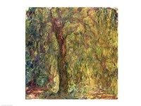 Weeping Willow green Fine Art Print