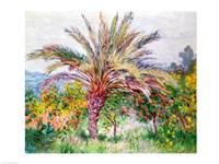 Palm Tree at Bordighera Fine Art Print