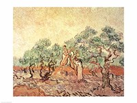 The Olive Grove, 1889 Fine Art Print