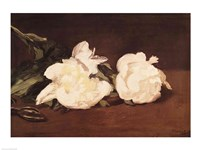 Branch of White Peonies and Secateurs, 1864 Fine Art Print