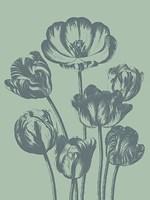Tulip 8 Fine Art Print