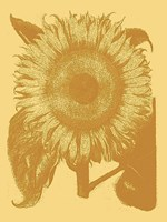 Sunflower 19 Fine Art Print