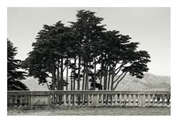 Cypress Trees and Balusters Fine Art Print