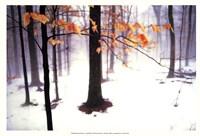 Quiet Woods Fine Art Print