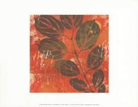 Exotic Vine Framed Print
