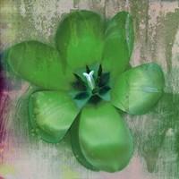 Tulip Fresco (green) Framed Print
