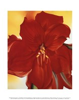 Red Amaryllis, 1937 Framed Print