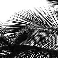 Palms 13 (detail) Fine Art Print