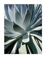 Cactus 1 Fine Art Print