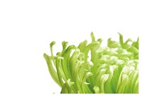 Green Bloom 1 Fine Art Print