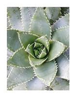 Cactus 3 Fine Art Print