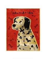 Dalmation Fine Art Print