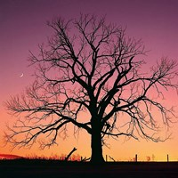 Arboral Afterglow Fine Art Print