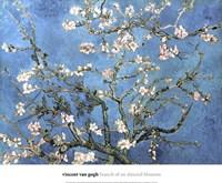 Almond Blossom, 1890 Framed Print