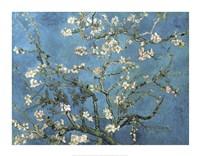 Almond Blossom, 1890 Fine Art Print