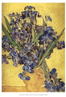 Irises in Vase Framed Print