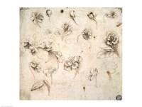 Study of the Flowers of Grass-like Plants Fine Art Print